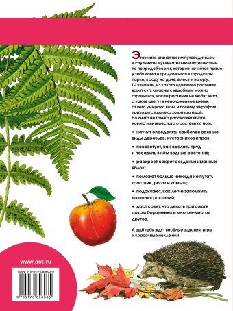Растения Волцит П.М.