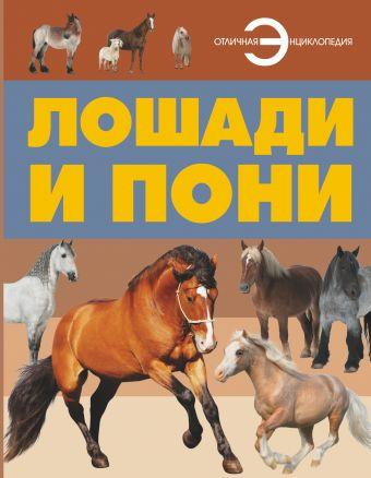 Лошади и пони .