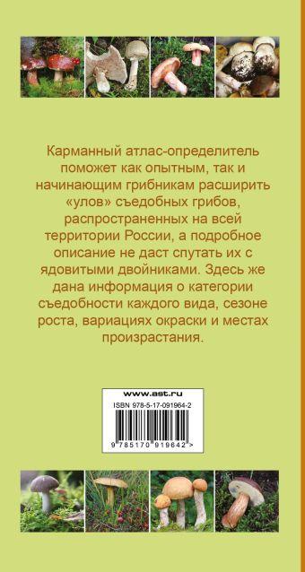 Самые распространенные съедобные грибы Матанцев А.Н., Матанцева С.Г.