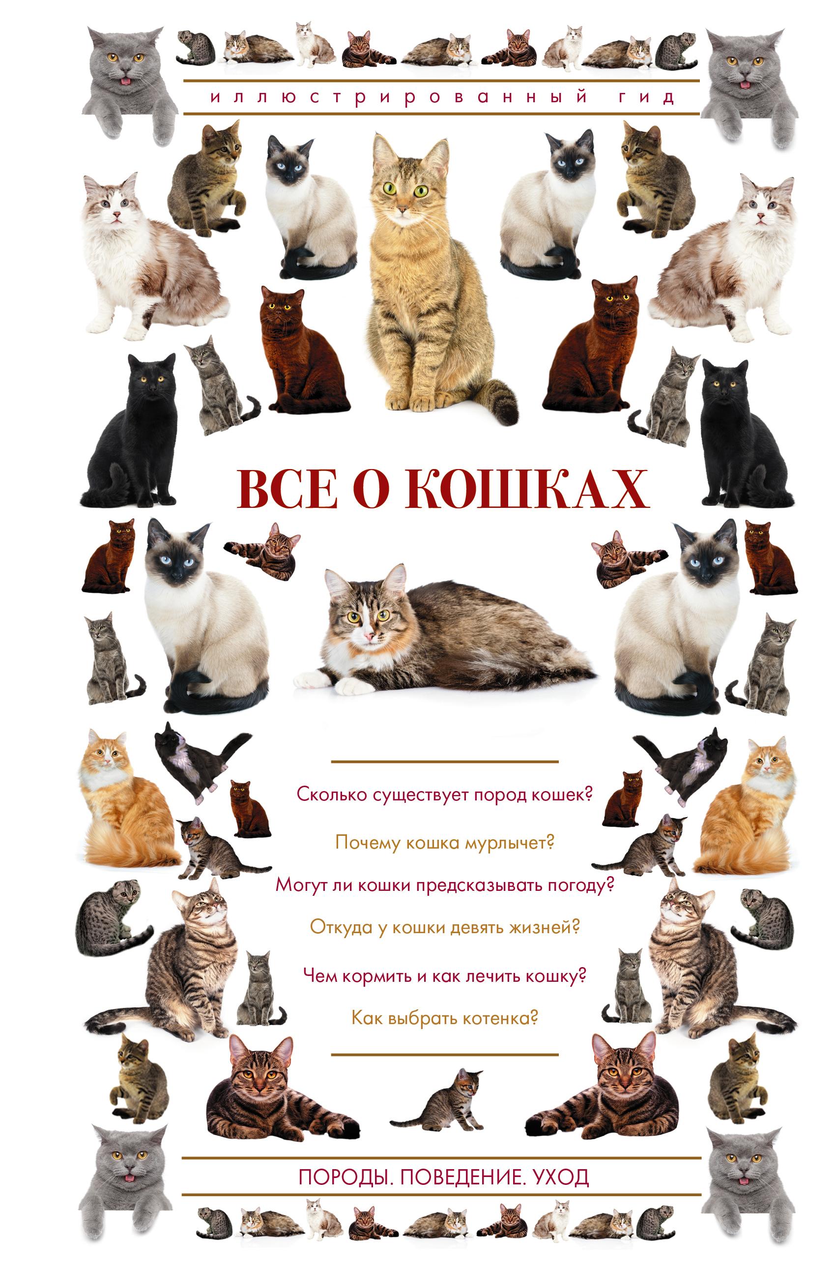 Фото #1: Все о кошках. Иллюстрированный гид
