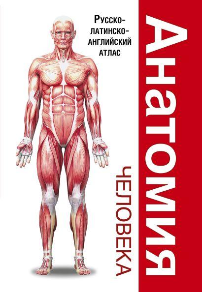 Анатомия человека. Русско-латинско-английский атлас - фото 1