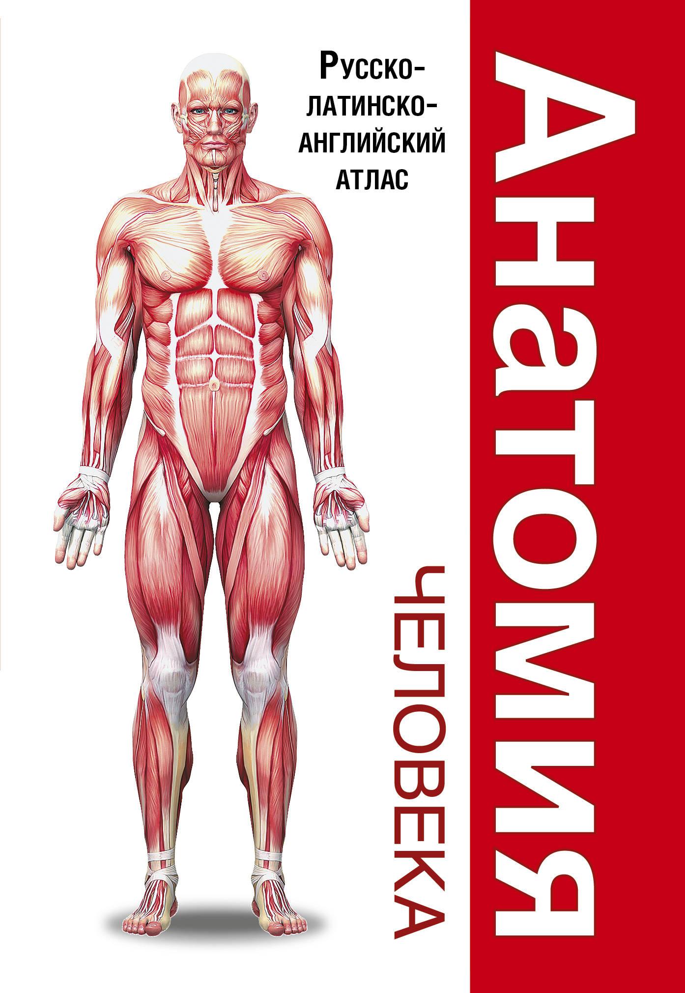 . Анатомия человека. Русско-латинско-английский атлас анатомия человека атлас
