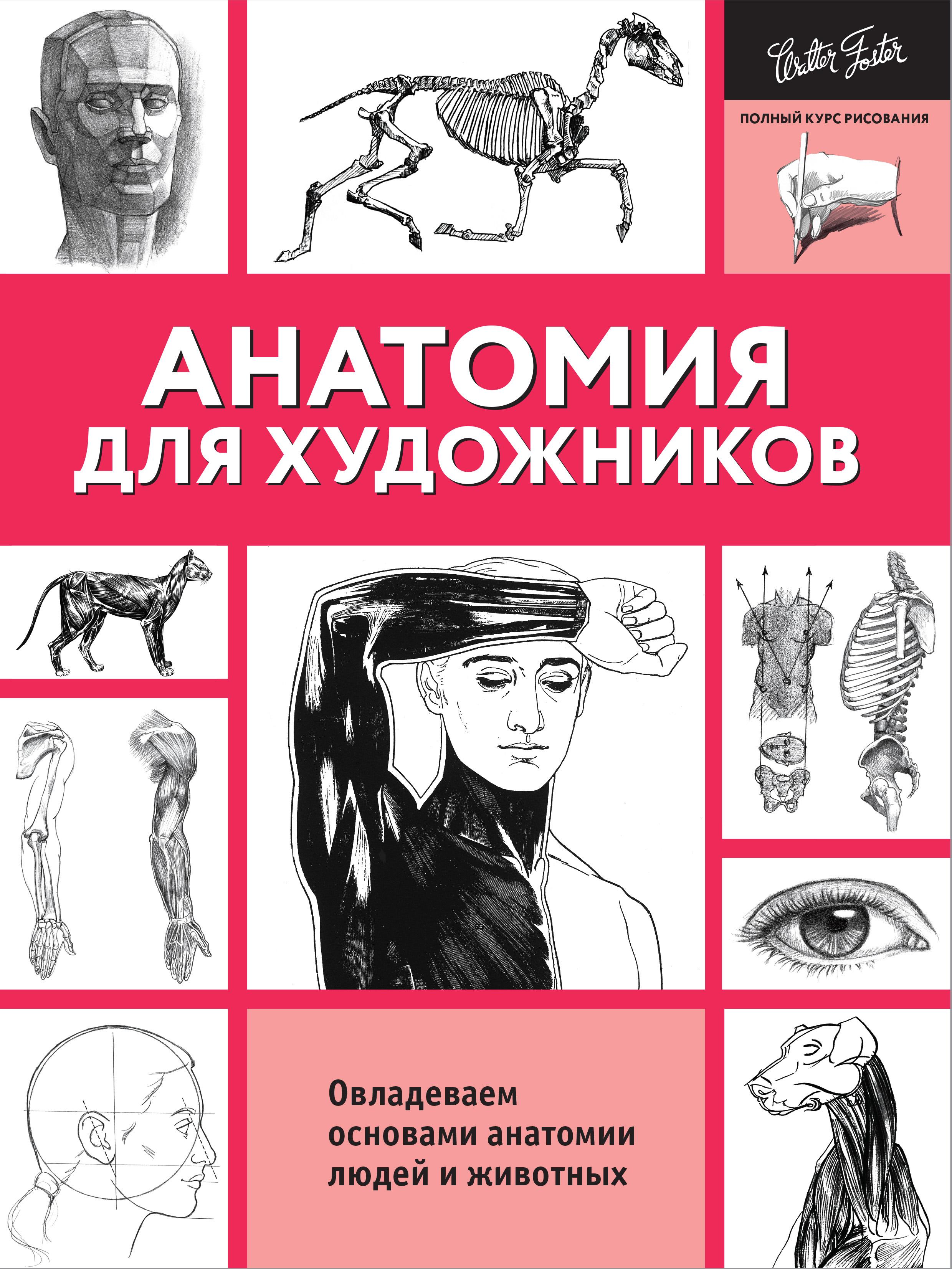 Анатомия для художников ( .  )