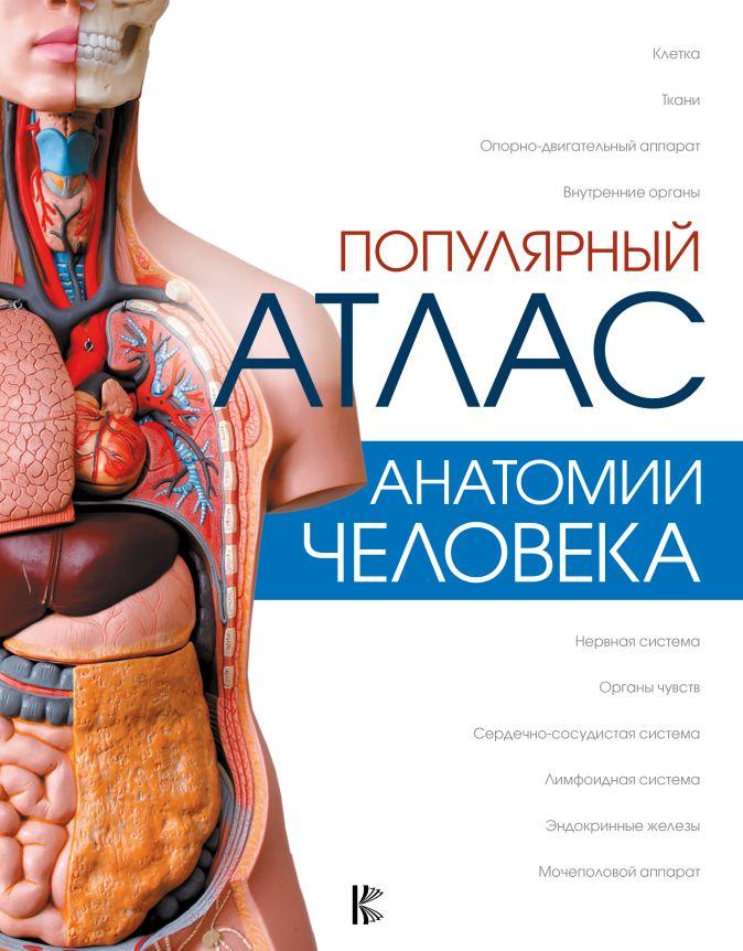 Популярный атлас анатомии человека Палычева Л., Лазарев Н.