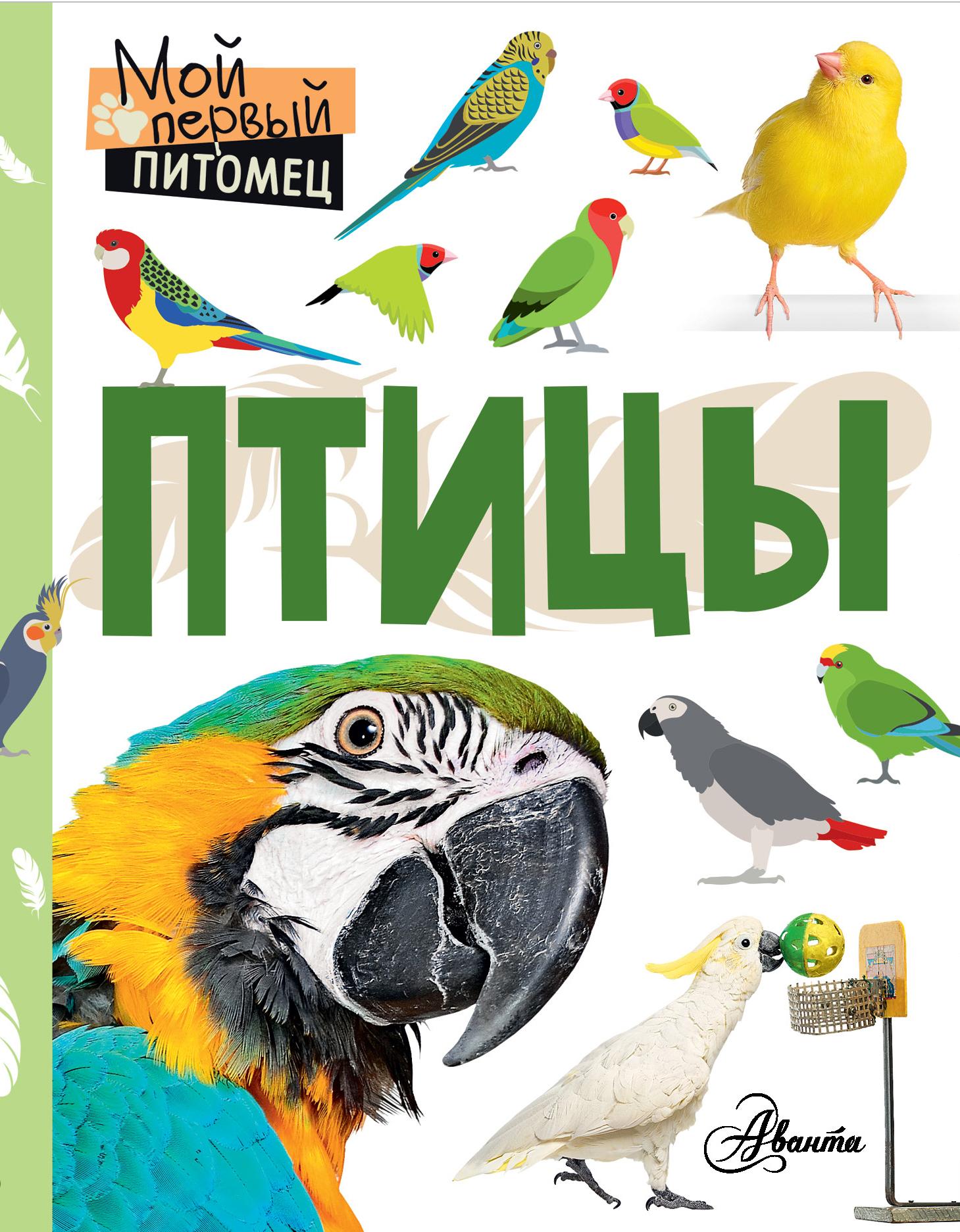 Наталия Аронова Птицы