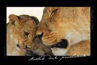 Альбом 12л-55104 Животные Африки (4в)