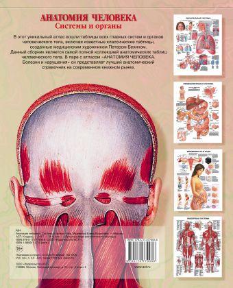 Анатомия человека. Системы и органы Махиянова Е.