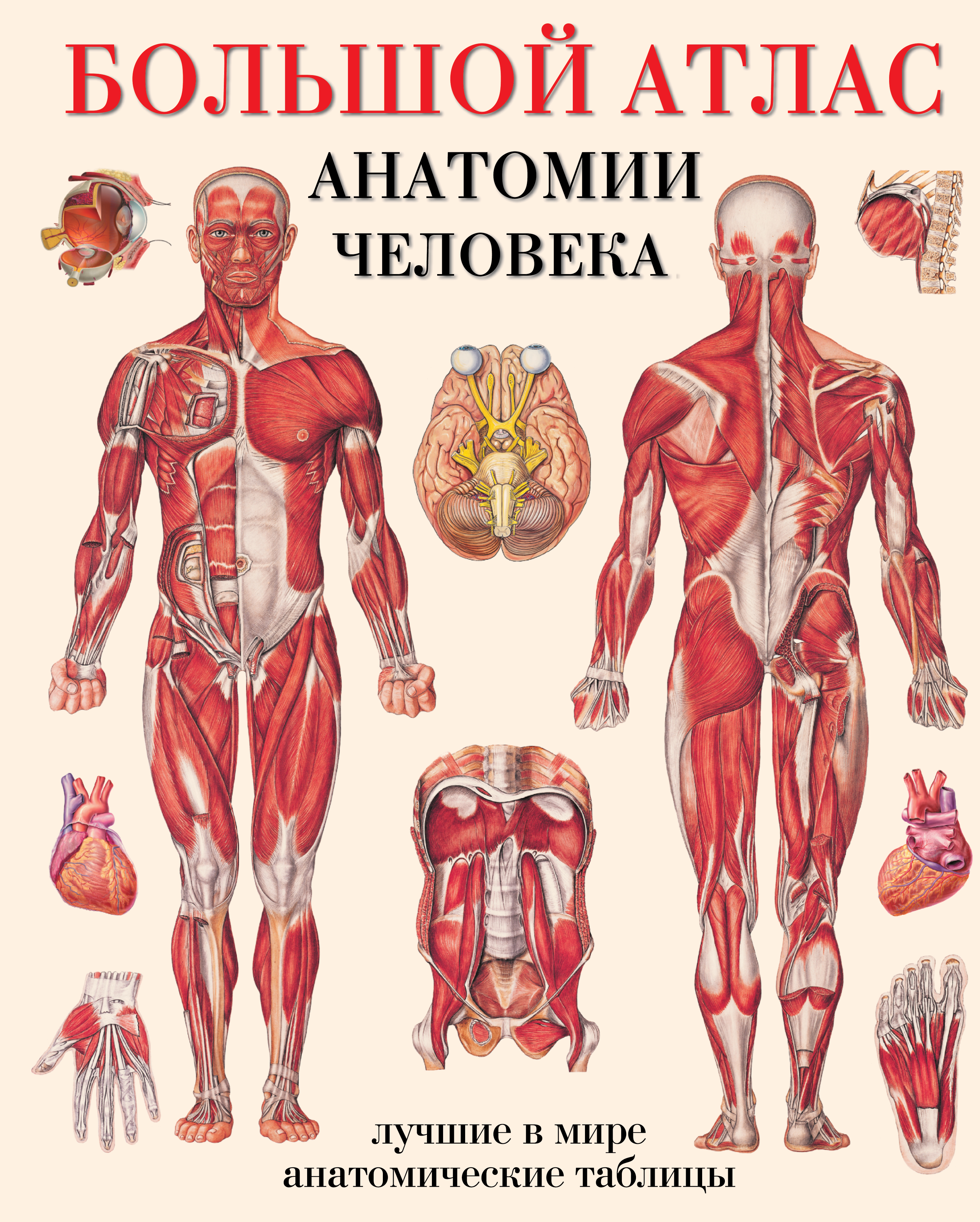Махиянова Е.Б. Большой атлас анатомии человека большой атлас анатомии человека