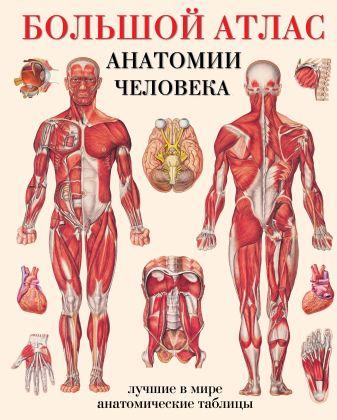 Махиянова Е.Б. - Большой атлас анатомии человека обложка книги
