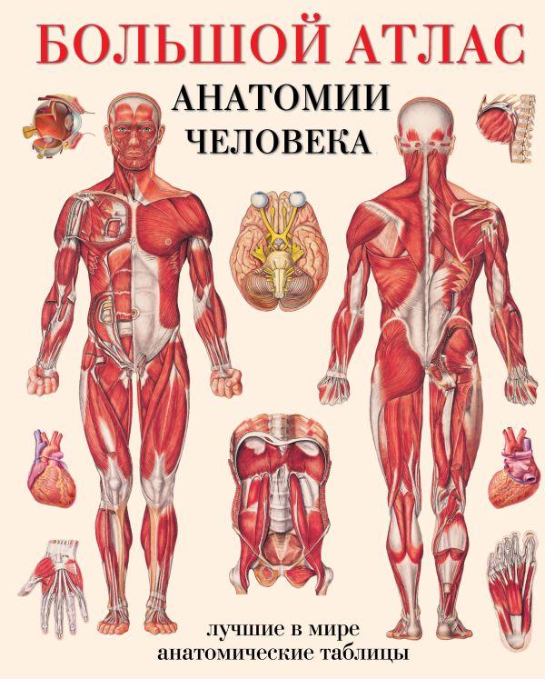 Махиянова Е.Б. Большой атлас анатомии человека ганьон м мерсеро в атлас анатомии человека с перекидными прозрачными постерами большой