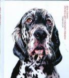 Вэсэн Гэнди - День собаки, или Весь цвет собачьего племени' обложка книги