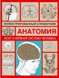 Мозг и нервная система человека Борисова И.