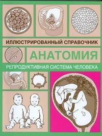 Репродуктивная система человека - фото 1