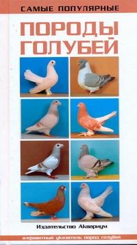 Самые популярные породы голубей Шмидт Хорст