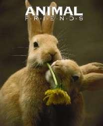 Тетр.2см.бл.Кролики-57091