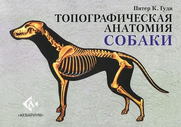 Топографическая анатомия собаки Гуди П.К.