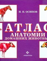 Атлас анатомии домашних животных Осипов. И.П