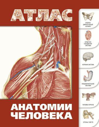Лёвкин С.С. - Атлас анатомии человека обложка книги
