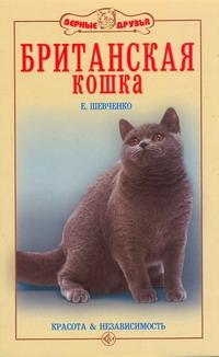 Британская кошка Шевченко Е.А.