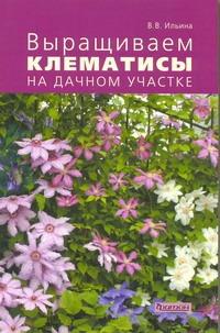 Выращиваем клематисы на дачном участке Ильина В.В.