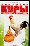 Домашние куры Рахманов А.И.