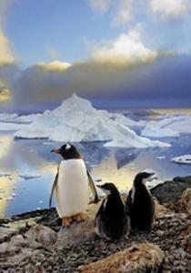 CLem.Пазл.  500эл.Классика.30375 Пингвины в Антарктиде