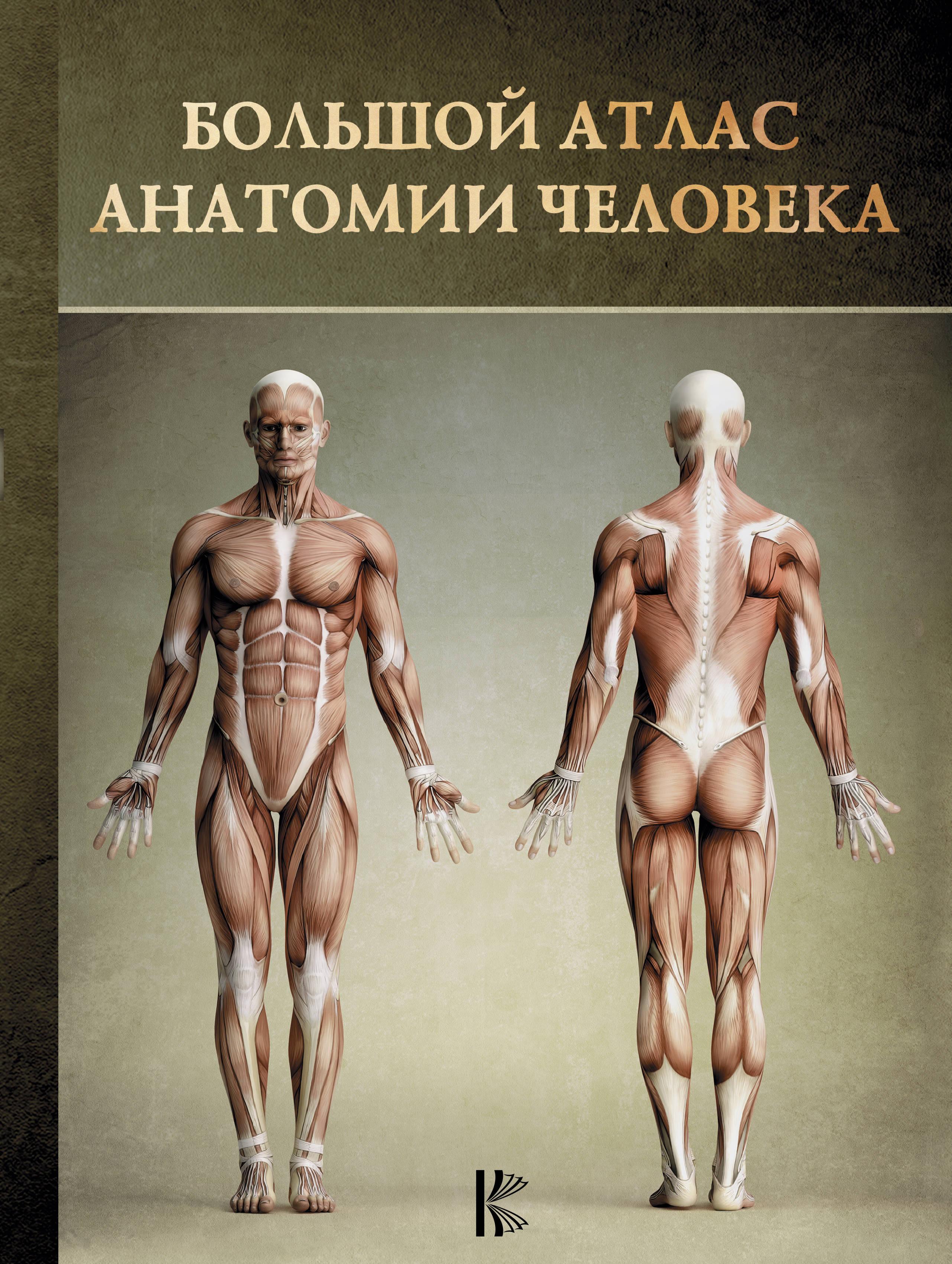 Перез В. Большой атлас анатомии человека анатомия человека русско латинский атлас