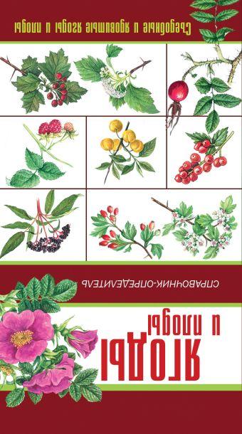 Грибы. Ягоды и плоды. Справочник-определитель Сергеева М.Н.