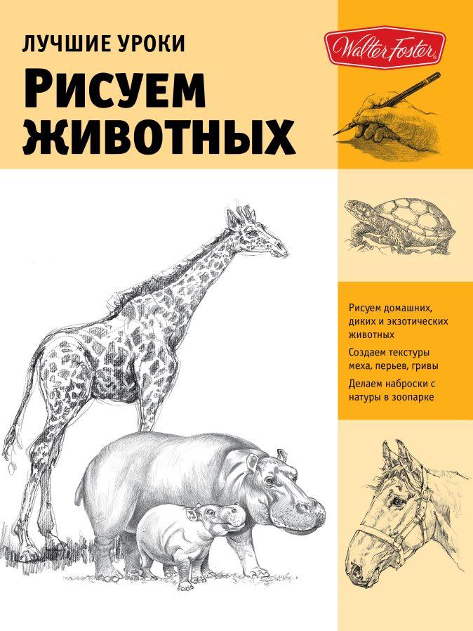 Степанова Л.И. - Рисуем животных обложка книги