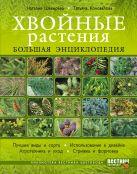 Шевырева Н., Коновалова Т. - Хвойные растения. Большая энциклопедия' обложка книги