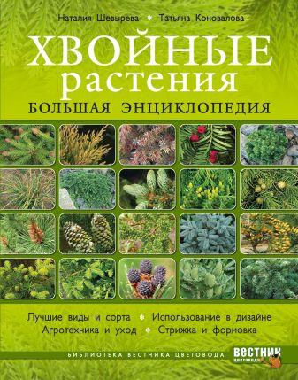 Шевырева Н., Коновалова Т. - Хвойные растения. Большая энциклопедия обложка книги