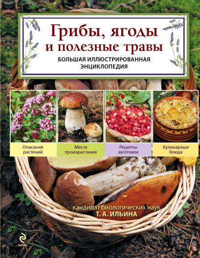Грибы, ягоды и полезные травы - фото 1