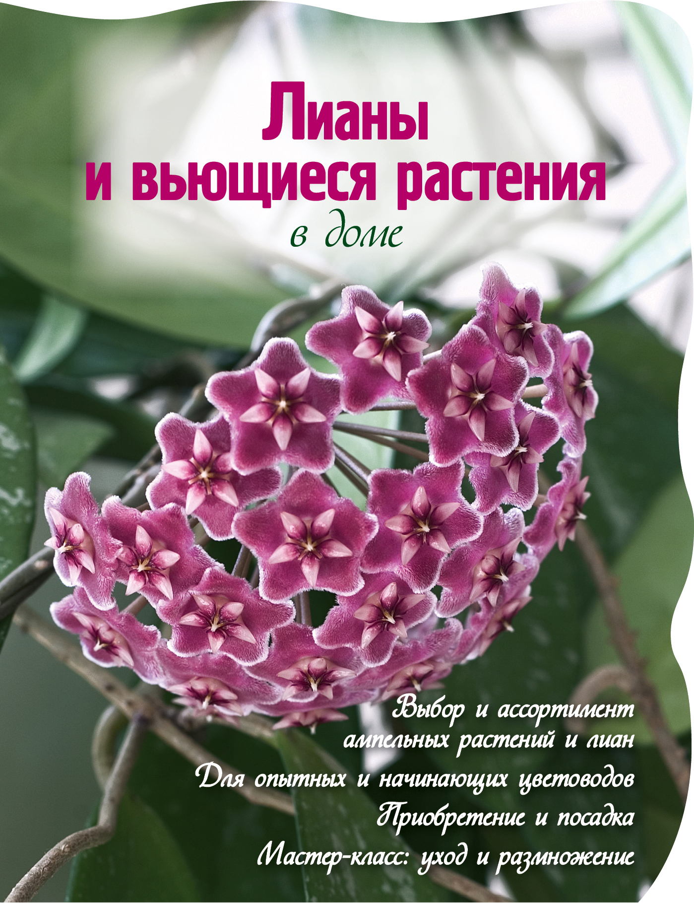 Лианы и вьющиеся растения в доме (Вырубка. Цветы в саду и на окне (обложка))