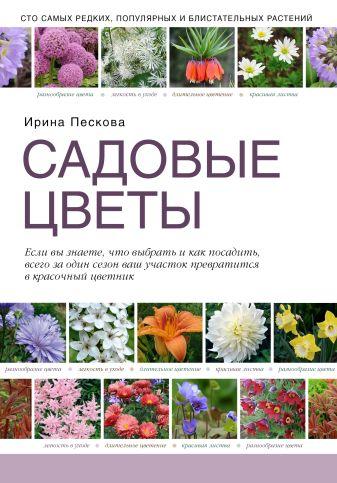 Ирина Пескова - Садовые цветы обложка книги