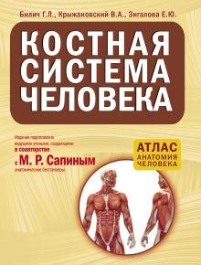 Костная система человека