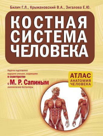 Костная система человека Билич Г.Л., Крыжановский В.А., Зигалова Е.Ю.