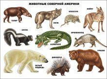 Животные северной америки
