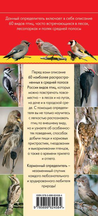Птицы. Определитель птиц русских лесов и полей Митителло К.Б.