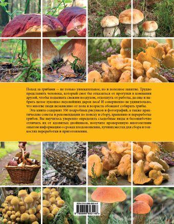 Грибы. Иллюстрированное руководство по сбору, переработке, хранению Анна Романова, Алла Булатова