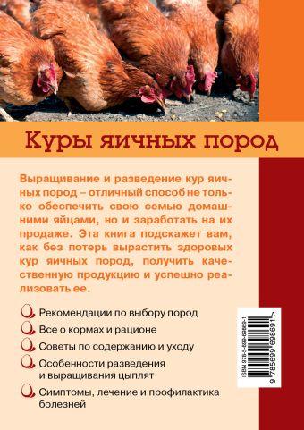 Куры яичных пород Балашов И.Е.