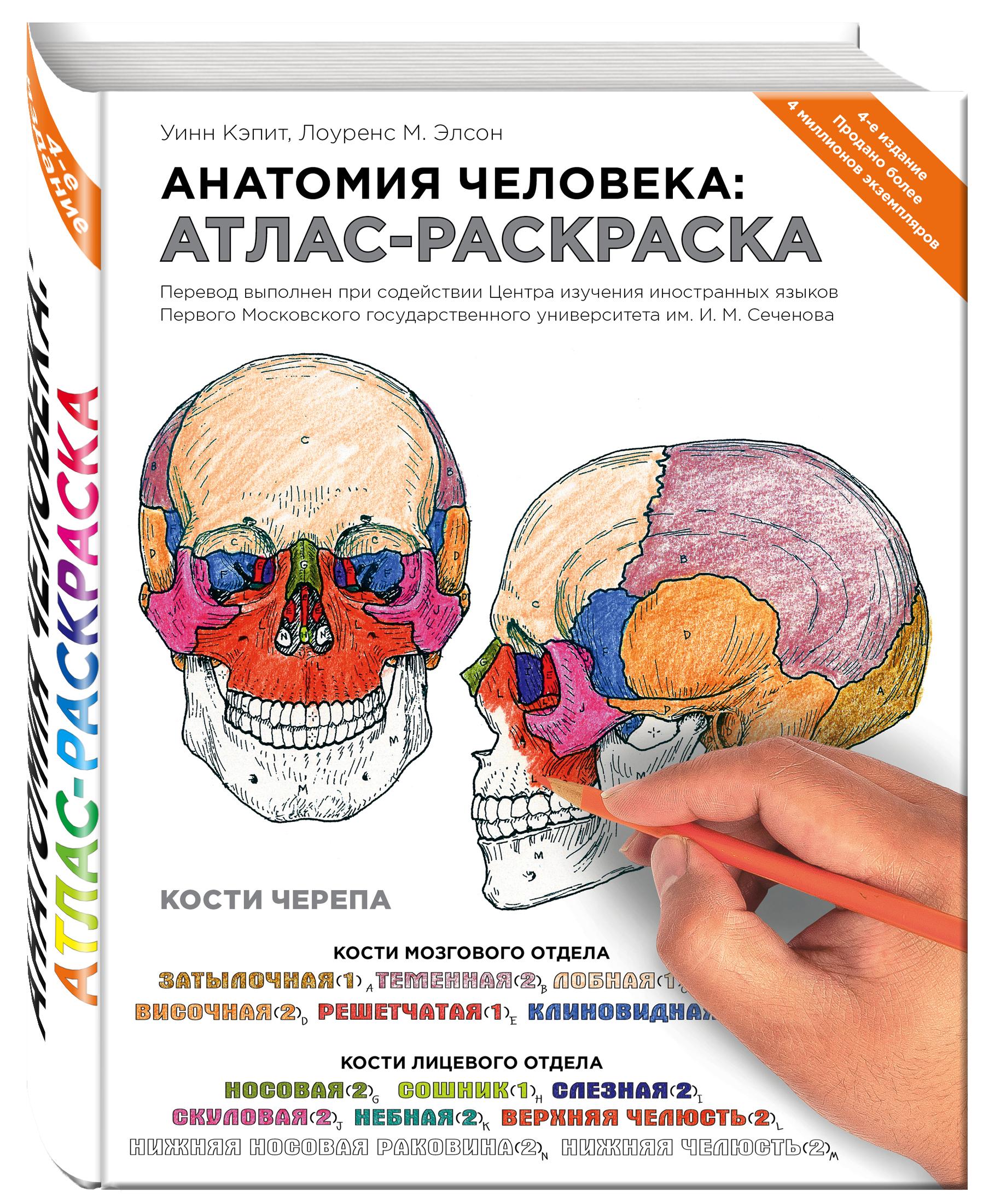 Элсон Л., Кэпит У. Анатомия человека: атлас-раскраска анна спектор большой иллюстрированный атлас анатомии человека