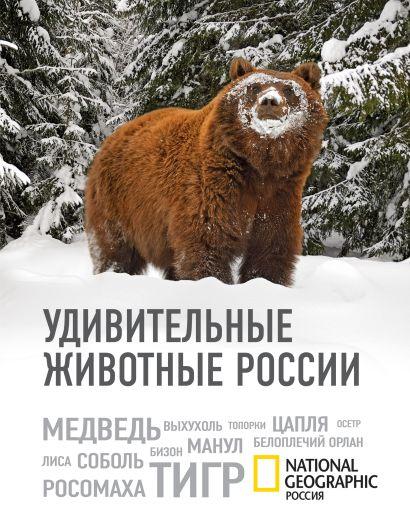 Удивительные животные России - фото 1