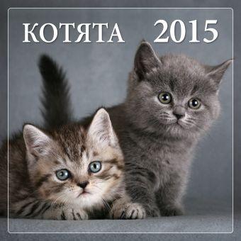 Котята 2015 Онищенко Н.