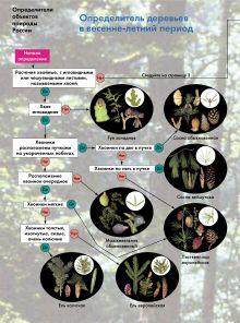 Определитель деревьев в весенне-летний период. 6–11 классы. Атлас-определитель