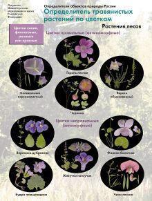 Определители травянистых растений по цветкам. Цветы лесов. 6-11кл. Буклет. Изд.1