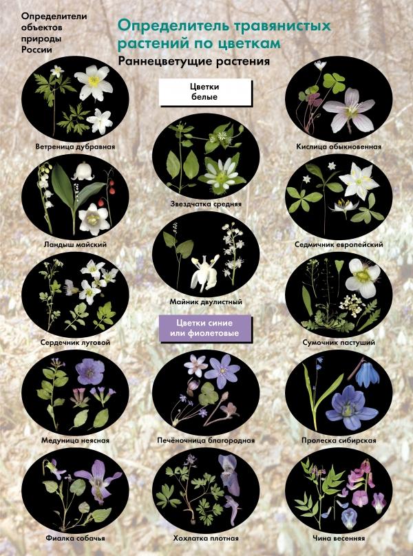 БоголюбовА.С. Биология. 6-11классы. Определитель травянистых растений по цветкам. Раннецветущие растения. Буклет womar в коляску north pole черные белые цветки