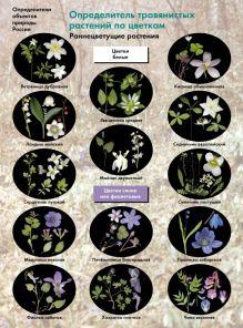 Биология. 6-11классы. Определитель травянистых растений по цветкам. Раннецветущие растения. Буклет