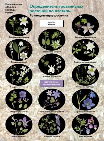 Биология. 6-11классы. Определитель травянистых растений по цветкам. Раннецветущие растения. Буклет БоголюбовА.С.