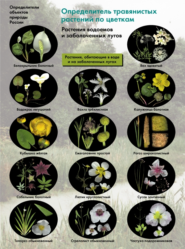 БоголюбовА.С. - Биология. 6-11классы. Определитель травянистых растений по цветкам. Растения водоемов и заболоченных лугов. Буклет обложка книги