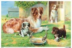 ПЛ Собака со щенками